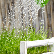 Green watering can used to water the frash grass — Stock Photo #9201428