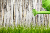 Pouring from watering can on grass water — Stockfoto