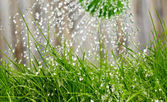 Sparare da vicino annaffiatoio sul giardino — Foto Stock