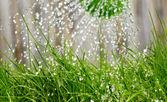 Vattenkanna på trädgården nära upp skott — Stockfoto