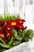 Piękny ogród kwiaty wiosną — Zdjęcie stockowe