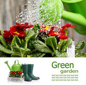 Concept de Conseil jardinage — Photo