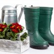 Stock Photo: Spring gardening - Watering can, grass and garden tools on white