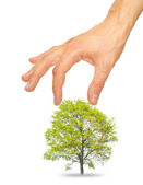 Tree and a male hand — Stock Photo