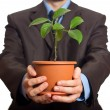 Royalty-Free Stock Photo: Businessman is holding a plant in pot