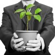 Businessman is holding a plant in pot — Stock Photo