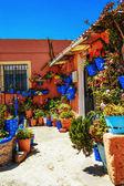 在街道上墙上的花盆里的花 — 图库照片