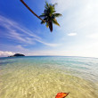 Beautiful tropical beach -  