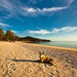 Dog on the beach — Foto de Stock