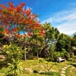 Beautiful tropical garden - Lizenzfreies Foto