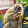 Monkey eating bread — Stockfoto