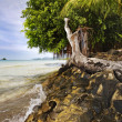 Tropical beach - Photo