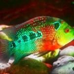 Fish in the aquarium — Stock Photo