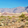 Lifeless landscape of the Death Valley — Stock Photo