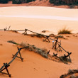 Coral Pink Sand Dunes — Stock Photo #8304623