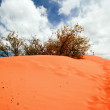 Coral Pink Sand Dunes — Stock Photo #8304628