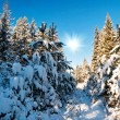 Winter field with fur-trees - 