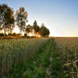 Sunset in summer field - Stockfoto