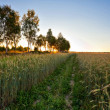 Sunset in summer field - Foto de Stock