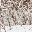 Frozen grass in sunshine - Foto Stock
