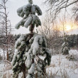 Small fur-tree in snow on sunset - Stock Photo
