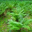 Background with fern - Foto de Stock