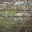Old tree bark background - 