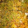 Autumn foliage at sunny day — Stock Photo #8306900
