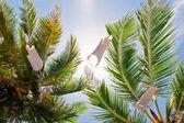 Hojas de las palmeras — Foto de Stock