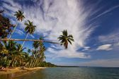 Tropical beach — Foto Stock