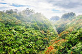 Mounts and jungle in foggy weather. — Stock Photo