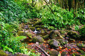 Small creek in the jungle of Big island. Hawaii. — Foto de Stock