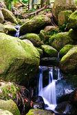 Kleine kreek in de jungle — Stockfoto