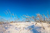 Winter field under — Stock Photo