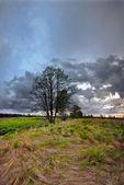 Solnedgång i fältet sommaren — Stockfoto