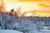 美丽的冬天日落 — 图库照片
