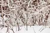 Zmrzlé trávě sluníčko — Stock fotografie