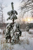 Small fur-tree in snow on sunset — Stock Photo