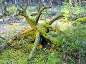 Letní les — Stock fotografie