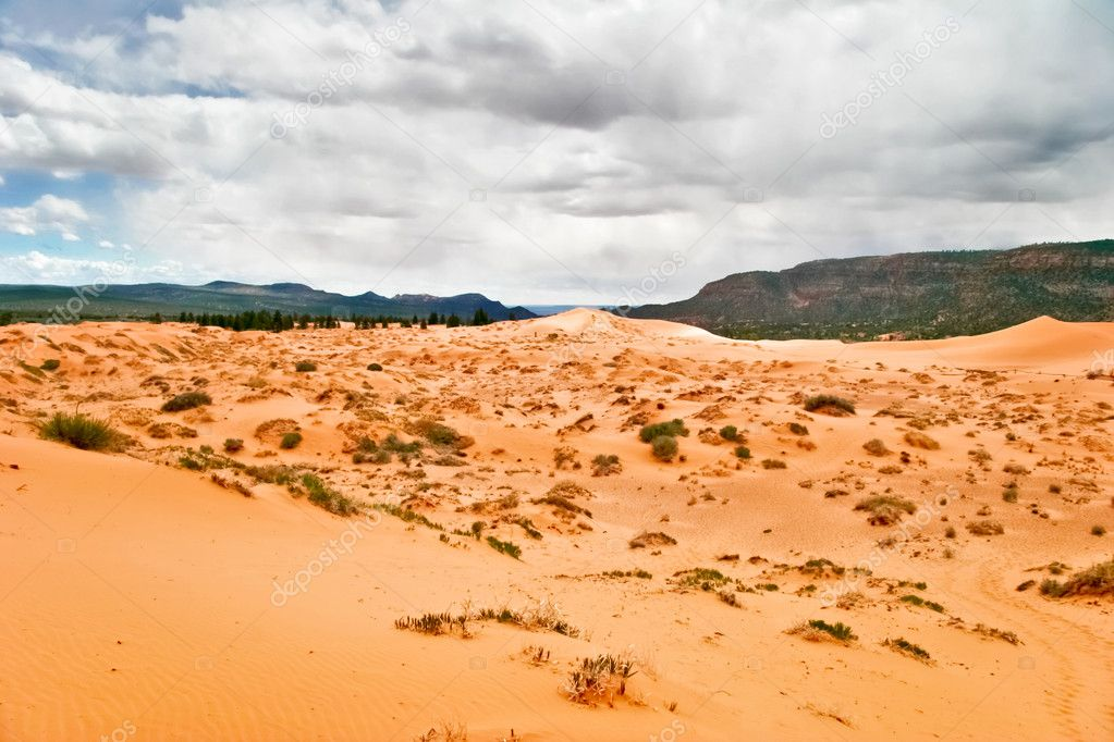 Coral Pink Sand Dunes State Park is a Utah state that features coral-hued sand dunes located beside red sandstone cliffs — Stock Photo #8304349