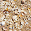Sea shells on sand background — Stock Photo