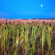 Stock Photo: Nightly landscape with Lunar