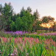 Sunset in summer field - Foto Stock