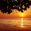 Tropical beach at sunset. - Stock Photo