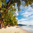 Exotic tropical beach. — Stock Photo