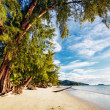 Exotic tropical beach. - Stock Photo