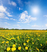 Yellow flowers hill under blue cloudy sky — Stock fotografie