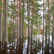 Coniferous forest on water - Stock Photo