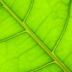 Green leaf — Stock Photo #8613653