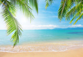 Beach with coconut palm and sea — 图库照片